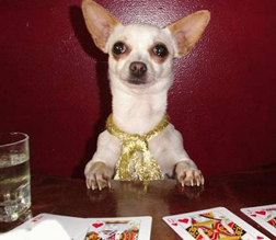 poker-smalldog1.jpg